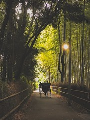 Sagano 嵯峨野. Kyoto (H.L.Tam) Tags: people japan sketchbook iphone iphoneography sagano japanese arashiyama life iphone7plus street documentary streetphotography 嵐山 kyoto 嵯峨野 京都 photodocumentary