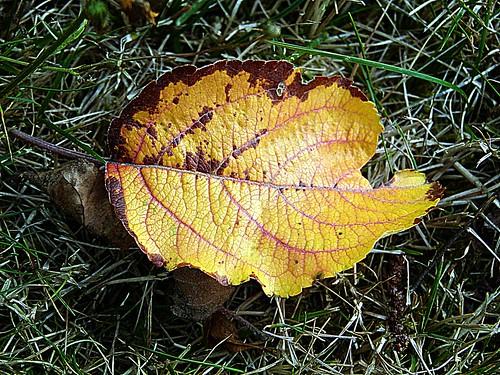 2017-07-30 garden (45)yellow orange dead leaf
