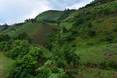 Steep crops (supersky77) Tags: deforestation escarpment rift valley slopes crops coltivazioni mais maize