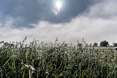 shallow dof in the morning (thomas.reissnecker) Tags: dew fog dof shallowdof bokeh badenwürttemberg