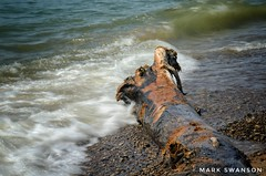 Driftwood coming onshore (mswan777) Tags: driftwood shore coast sand wet waves lake michigan outdoor nature nikon d5100 sigma 70300mm scenic seascape stevensville great lakes