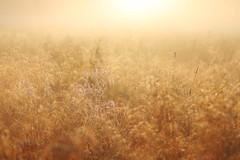 IMG_1970 (izagajewska) Tags: świtak komorów 2017 łąka motyle rowerem 340 mgła wschod wschodslonca zalew w komorowie zalewwkomorowie switaczekkomorowski niemaspania