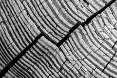 Texture (197/365, July 16th) (Yannis_K) Tags: yannisk nikond7100 nikon35mmf18dx project365 abstract macromondays texture wood rings blackandwhite monochrome macro