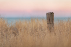 twilight (Marc McDermott) Tags: grass lake lakeontario post fence old weathered weatheredorworn evening sunset blue beautiful shallowdepthoffield ef135mmf2usm