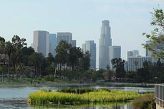 Downtown L.A. Skyline as Seen From Echo Park (Robb Wilson) Tags: losangeles downtownla echopark echoparklake lotusfestival laskyline