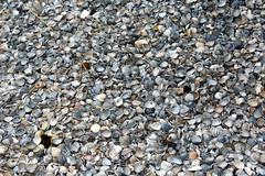 A path of shells (Davydutchy) Tags: paysbas zilt saltfarm test farm scientific science saline salination verzilting schelpenpad schelp schelpen shell path pfad proefboerderij testedontexel june 2017 nederland netherlands niederlande texel eiland island insel île noordholland proefboerdery