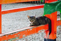 Today's Cat@2017-07-21 (masatsu) Tags: cat thebiggestgroupwithonlycats catspotting pentax mx1