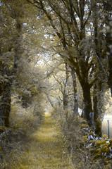 Le chemin (david49100) Tags: 2017 juillet lot rocamadour arbres chemin d5100 nikon nikond5100 path trees
