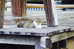 Today's Cat@2017-07-26 (masatsu) Tags: cat thebiggestgroupwithonlycats catspotting pentax mx1