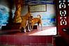 ,, All Is Forgiven ,, (Jon in Thailand) Tags: mama rocky dog dogs k9 k9s thespirithouse jungle themonkeytemple nikon d300 nikkor 175528 red blue yellow green dogsplaying playingdogs happydogs dogears dogtails dogtongue dogpaws whitesox funnydogs sillydogs dragon yin kuanyin redfloortile statue littledoglaughedstories