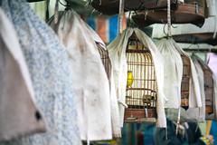 Bird Market (Nuuttipukki) Tags: bird vogelfänger birdmarket hongkong markets hk asia travel cage vogelkäfige kowloon yuen po yuenpo