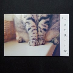 (shane.postcards) Tags: cat forswap directswap postcardswap postcard postcrossing swap trade