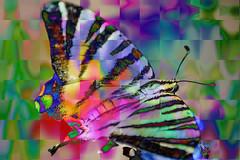 DSC_2608t (seguicollar) Tags: mariposa lepidoptero rayada colorido color colores closeup macro macrofotografía imagencreativa photomanipulación art arte artecreativo artedigital virginiaseguí
