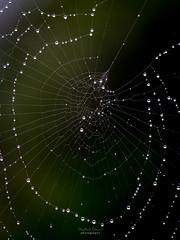 Abstract Web