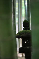 Moss Bamboo Stone Lantern No People Focus On Foreground Sculpture Close-up Taking Photos Green Color Tadaa Community Popular Photos EyeEm Best Shots EyeEm Selects EyeEm Best Shots - My Best Shot (mickey7878us@yahoo.com) Tags: moss bamboo stonelantern nopeople focusonforeground sculpture closeup takingphotos greencolor tadaacommunity popularphotos eyeembestshots eyeemselects eyeembestshotsmybestshot