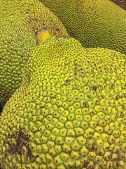 Bumpy Fruit (cobalt123) Tags: asian leelee closeup food fruit gigantic green iphone6plus jackfruit unusual yellow bump bumpy texture pattern