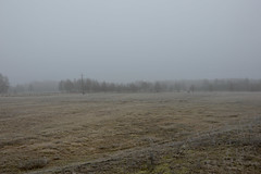 Cold Morning [8] 2 (wrona_czarna) Tags: cold fog trees