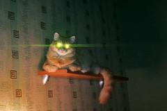 Unsuccessful flash photo (Echo (EchoForDolls)) Tags: cat flash
