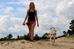 Hiking (Mirretjuh) Tags: golden retriever link pup puppy puppys 7 months old netherlands pet dog walking hiking