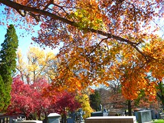P1060602 (amiterangi1) Tags: woodlawncemetery autumn cemetery woodlawn