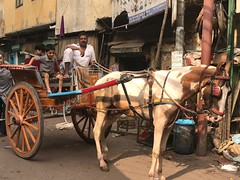 Beyond BMW (Mayank Austen Soofi) Tags: delhi walla horse cart carriage tonga beyond bmw car