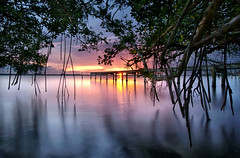 Among the mangroves. (Jill Bazeley) Tags: unesco international day conservation mangrove ecosystem indian river lagoon intracoastal waterway tree brackish water dock pier jetty prop roots sony a6300 1018mm florida brevard county merritt island ecology