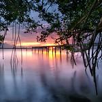 Among the mangroves. thumbnail