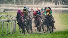 (dawvon) Tags: asia mammal racehorses jockeys horses china sportsphotography shatinracecourse wet rain actionphotography nature hongkong people animals horseracing newterritories sports shatin hk hkjc hongkongjockeyclub horserace jockeyclub racecourse 沙田 香港