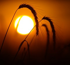 Summer sunset (Vladi_L) Tags: summer sunset sunlight sun nature nx300 nx vivitar vivitarseries170210mm135macrofocusingautozoomvmc210mm hot manual manuallens