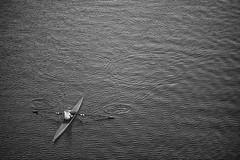 morning row (Ben McLeod) Tags: blackandwhite oregon portland sellwoodbridge willametteriver boat river rowing