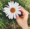 Daisy #flowers #phography #beauty (busefidan) Tags: flowers phography beauty