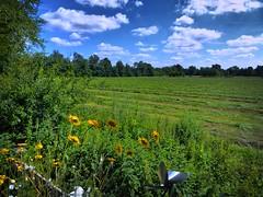 Die Mädchenwiese frisch gemäht. (Wallus2010) Tags: gras wiese himmel panasonic tz61 mädchenwiese grosmoor