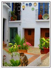 Rincón (Alicia B,) Tags: frigiliana málaga españa spain gato andalucía puebloandaluz