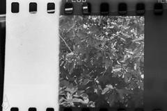 18 (andrea.fogliacco) Tags: giallo film pellicola ilford fp4 plus sviluppo rullini vintage black white develop developed reflex old school vecchia scuola