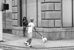 Out for a Walk (ROSS HONG KONG) Tags: walk walking dog intersection broadway la losangeles black white bw blackandwhite leica m8 streetphoto blanc noir