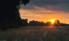 Erntezeit (otto.hitzegrad) Tags: natur wolken sonne sommer bäume feld landwirtschaft korn erntezeit