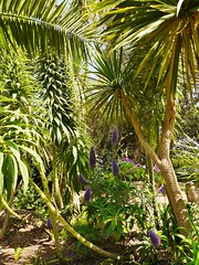 07.06.2017 - Batz, jardin Georges-Delaselle (10) (maryvalem) Tags: france bretagne finistère îledebatz alem lemétayer alainlemétayer