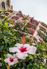 Flowers and buildings. (CWhatPhotos) Tags: cwhatphotos flowers building hotel green tenerife puertodellacruz puerto del la cruz going holiday holidays photographs photograph pics pictures pic picture image images foto fotos photography artistic that have which with contain olympus esystem four thirds digital camera lens 43 mft micro