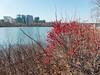 Georgetown waterfront park (marshmallow)) Tags: 2017 georgetown georgetownwaterfrontpark washingtondc dmclx7 lumix lx7 panasonic trip washington