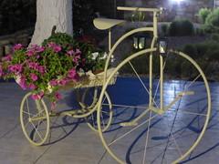 I smell..wedding!!!P1020885 (amalia_mar) Tags: wedding weddingdetails flowers flowerpot bicycle decoration weddingdecoration weddingideas