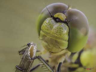 dragonfly visit