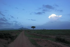 Blue hour Kidepo valey (Schagie) Tags: blue sky lucht wolken cloud tree boom berg landschap landscape sunset uganda kidepo blauw uur verlaten deserted dirtroad