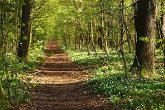 A path (pszcz9) Tags: przyroda nature natura pejzaż landscape las forest forestimages ścieżka path beautifulearth sony a77