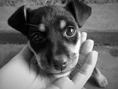 Daisy (Liliane Loose) Tags: dog puppy viralata cachorro cão hund perro daisy