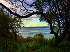 Warden head reserve I (elphweb) Tags: hdr highdynamicrange nsw australia sea ocean water coast coastal tree trees forest