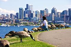 GasWorksPark_ 09 (hitomid) Tags: gasworkspark lake geese