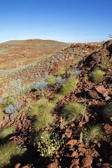 Pilbara_Cichester national park7839