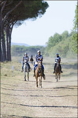 Toscana Endurance Lifestyle '17 (°Valse°) Tags: sanrossore endurance lifestyle toscana gara mondiale emirati arabi dubai purosangue horses horse cavallo cavalli corsa race galoppo trotto allenamento premio sfida pisa parco nikon d7000 sigma 70200 28 foto mosso espressioni