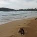 Mirissa - Dog Beach