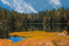 Mustalampi (Joni Salama) Tags: suo lampi vesi luonto retkeily espoo suomi luukki uusimaa finland fi pond swamp water landscape